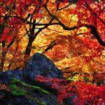 秋分の日の由来と歴史とは?どのような決め方をするのか?いつ?