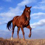 「どこの馬の骨ともわからぬ輩に」馬の骨の意味とは?死馬の骨を買う?