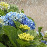 梅雨の意味・由来・語源を子供向けに説明するには?