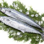 魚へんに春と書く漢字の読み方は?鰆の旬っていつ・・・?